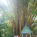 Bambus Manuel Antonio