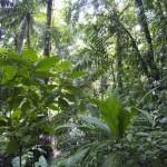 Jungle Nationalp Piedras Blancas