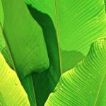 Einmalige Pflanzenwelt