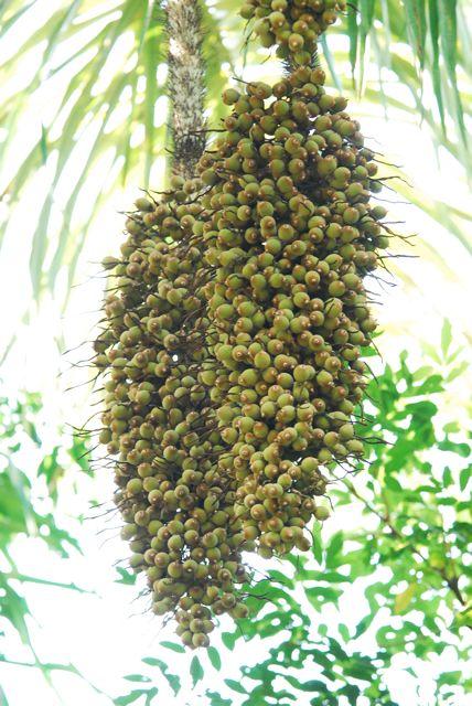 Pflanzenwelt auf Costa Rica