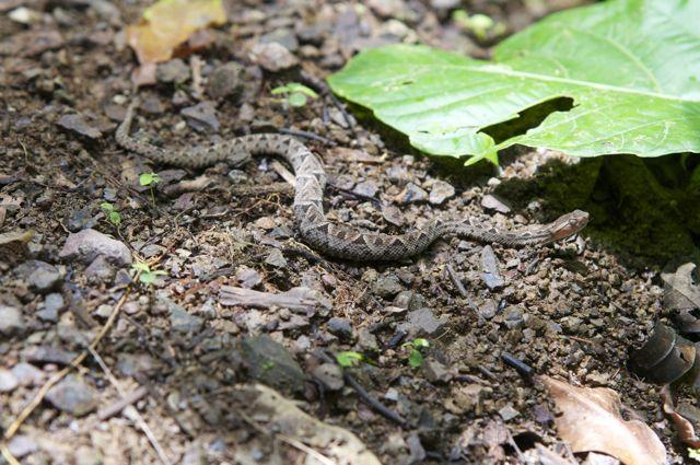 Schlange im Nationalpark Piedras Blancas